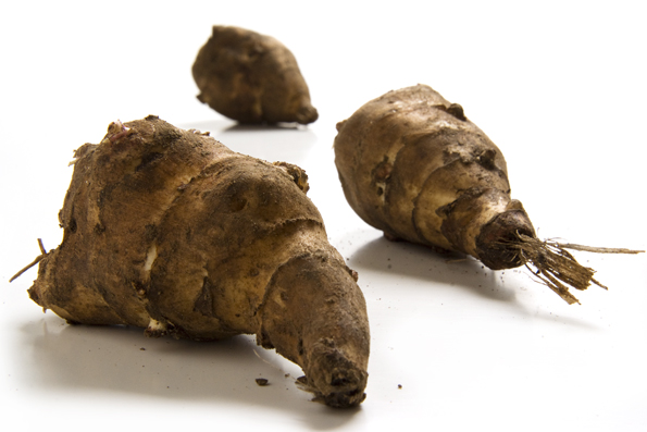 Jerusalem artichoke Plant tuber diversity for the wild field