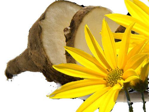 Jerusalem artichoke is healthy and valuable