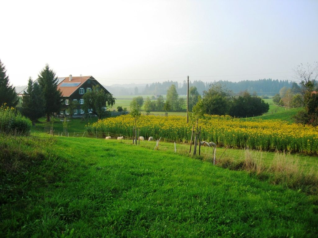 The Jerusalem artichoke manufactory in the Allgäu